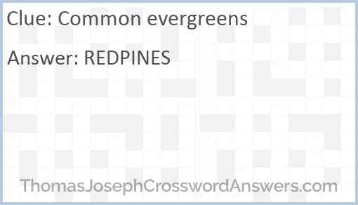 Common evergreens Answer